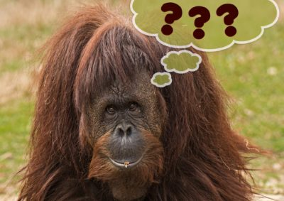 Bilde av en apekatt med snakkeboble med spørsmåltegn